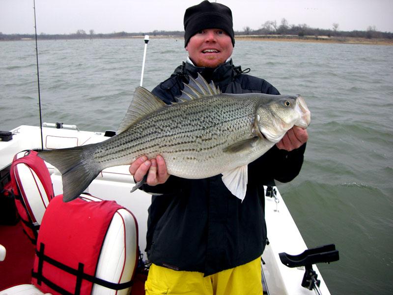Lake lewisville fishing guide photos hybrid fishing pictures for Lake lewisville fishing